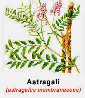radix astragali-kandung utama-tasly danshen plus-herba jantung