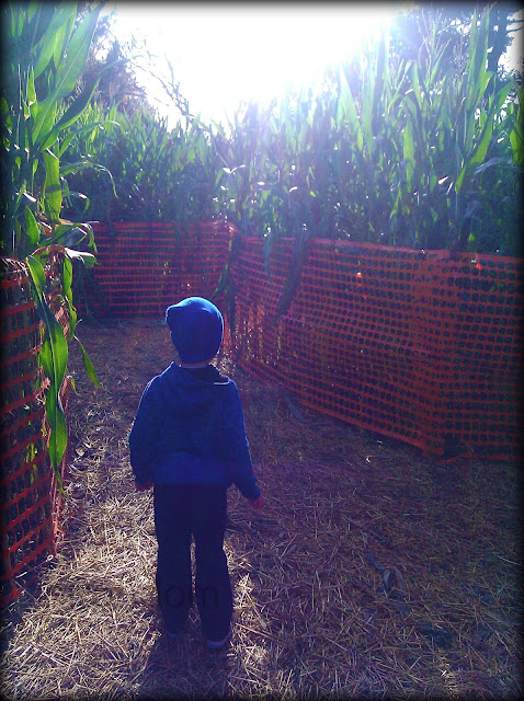 Thies Farm Corn Maze