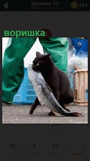 воришка кошка в зубах тащит большую рыбу