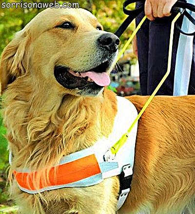Cão guia - Sorriso na Web