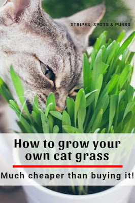 Grow cat grass