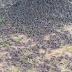 La extraña muerte de las aves que cayeron del cielo en cementerio de Balí.