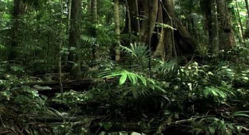 Gambar Ekosistem seimbang di hutan hujan tropis - Sumber: geologinesia.com