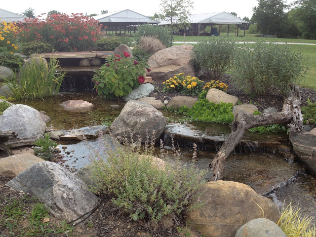 landscape planting around waterfall
