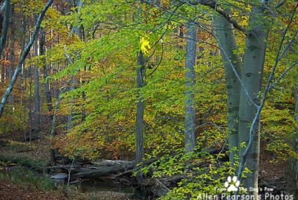 Fall at Walney Park