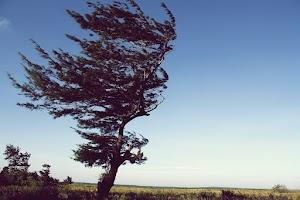 Belajar dari Filosofi Pohon