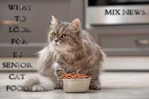 What to Look for in Senior Cat Food