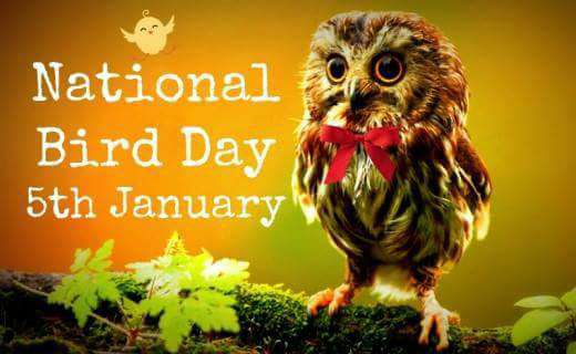 National Bird Day Wishes Unique Image