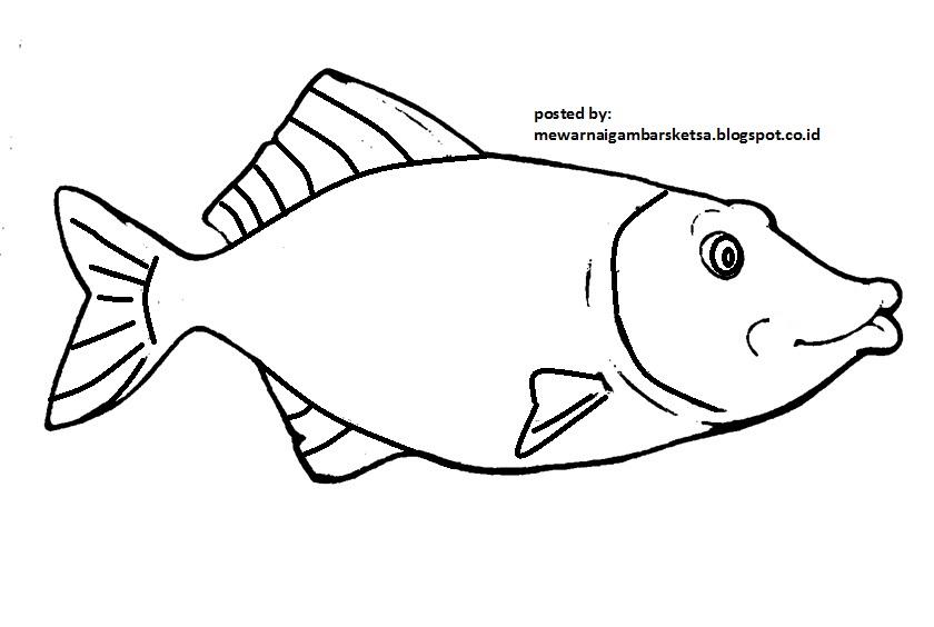 Mewarnai Gambar Sketsa Hewan Ikan