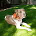 How to Manage a Yard with a Dog