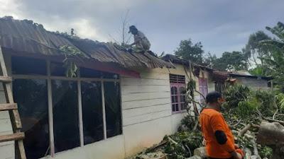 Pohon Damar di Bukittinggi Tumbang, Nyaris Hancurkan Rumah Warga
