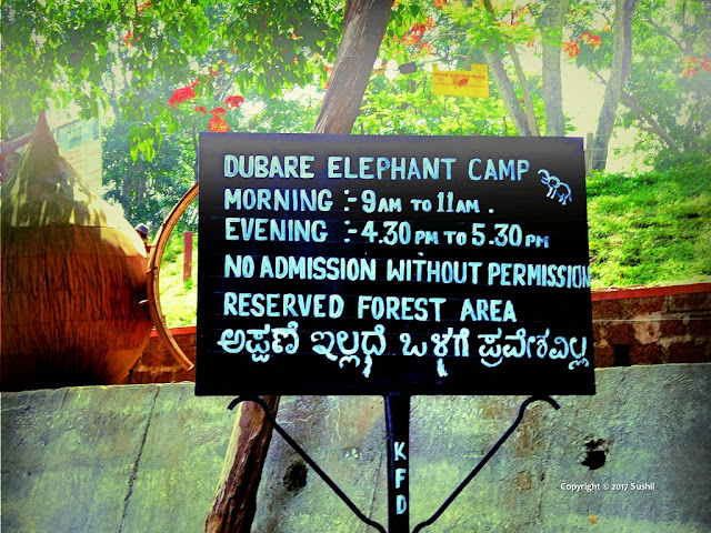 Timings for Dubare Elephant Camp, Dubare, Coorg