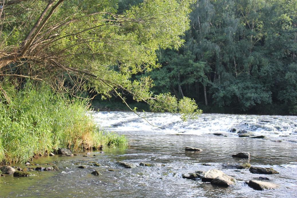 řeka Dyje v Národní parku Podyjí