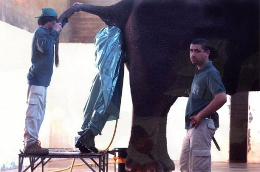Funny Bad Work Worst Jobs Pictures Elephant Butt Explorer