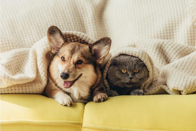 Bộ ghế sofa tốt đối với gian đình có nuôi thú cưng