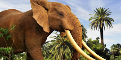 """An African elephant with large white tusks in the movie """"Escape from Extinction"""""""