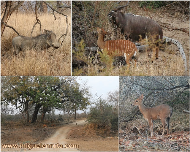 Fauna-Parque-Kruger