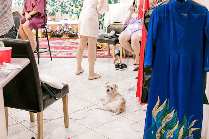 My Dog at my wedding in 2018