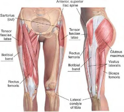 tensor fasciae latae pain hip muscle pain injury running virtual race