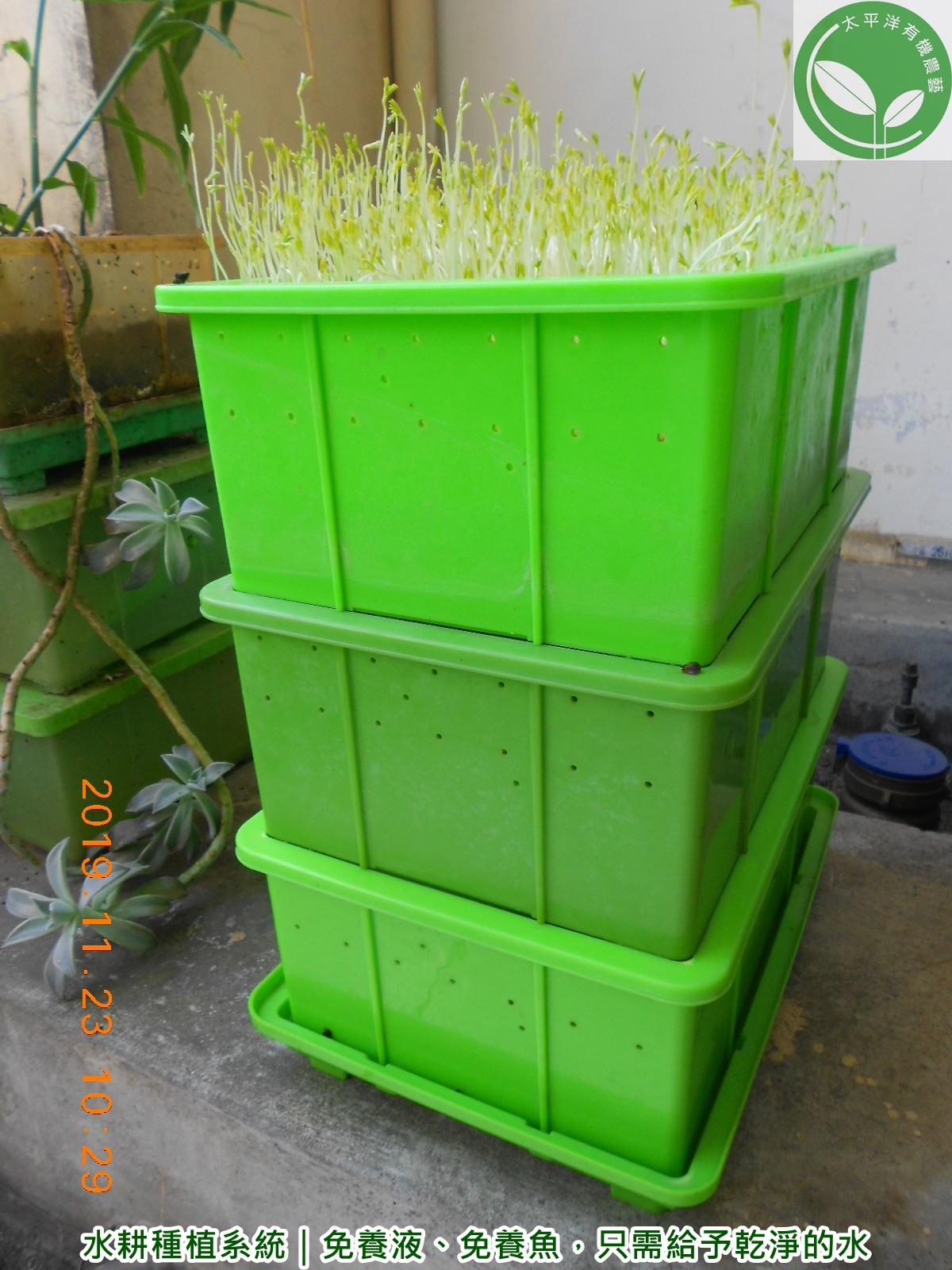 育苗盤,種菜機,如何在家種菜,豆芽箱,室內種菜機,水耕種植系統,豆芽機,育苗箱,水耕栽培diy與設備,台灣種植箱