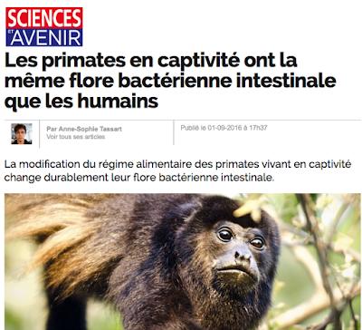 http://www.sciencesetavenir.fr/animaux/biodiversite/20160901.OBS7251/les-primates-en-captivite-ont-la-meme-flore-bacterienne-intestinale-que-les-humains.html
