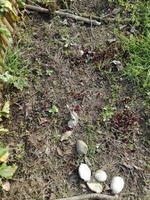 orto-di-marzo-spinaci-radicchio