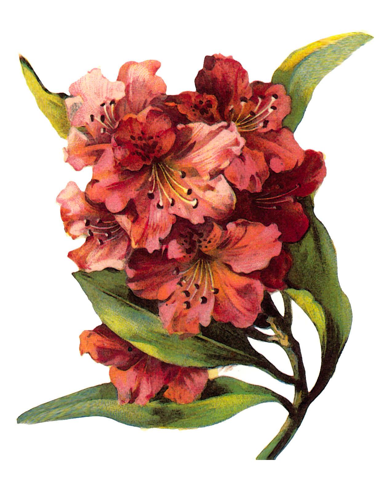 Vintage Flower Art 113