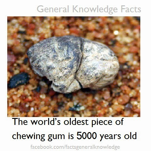 The world's oldest  chewing gum is 5000 years old