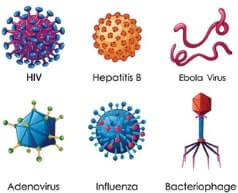 what is virus and viruses protein coat, viruses, viruses structure, viruses journal, viruses are, viruses size, viruses that cause cancer, viruses slide share, what is virus, what is virus in biology, what is virus in computer, what is virus corona, what is virus load, what is virus interference, what is virus and antivirus, what is virus total, what is virus protection, what is virus disease, virus protein, virus protein coat, virus proteins, virus protein synthesis, virus protein denaturation, virus protein dna, virus protein receptors, virus proteinas, virus protein sheath, virus protein interaction, virus protein binding