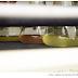 Butantan está desenvolvendo em laboratório anticorpos para o tratamento de COVID-19