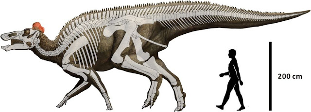 Paleontologists reappraise description of duck-billed hadrosaurs