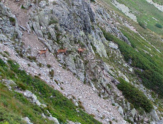 Kozice zbiegające do Salatyńskiej Doliny.