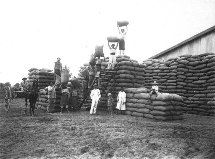El agro... 50 años después: DE AYER A HOY : COSECHA Y ALMACENAMIENTO DE LOS GRANOS.
