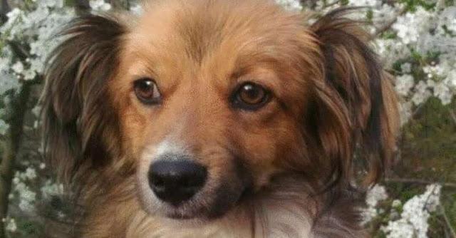 Голодающий пес: когда ему дали сосиску, он отнёс ее кошке!