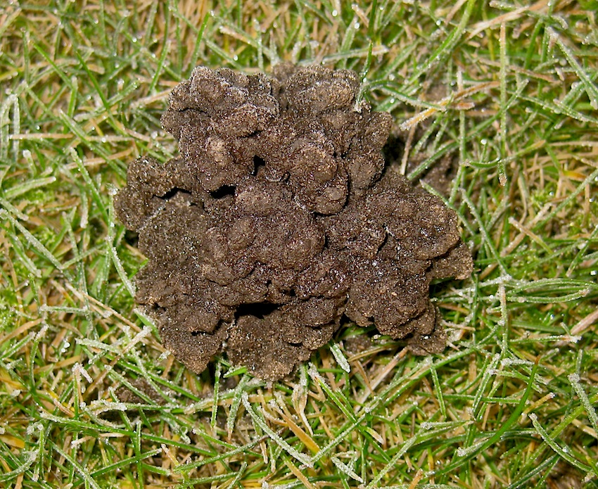 Roger Brook - the no dig gardener: Using iron sulphate to