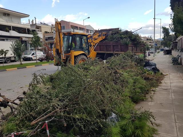 Εκτεταμένο κλάδεμα δέντρων στην οδό Ασκληπιού στο Ναύπλιο