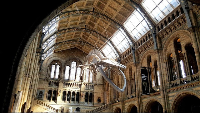 squelette-baleine-musee-londres