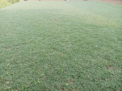 Jual rumput Golf - tukang rumput bogor