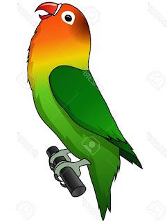 sketsa lovebird