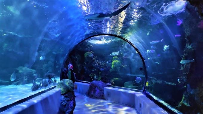 Virginia Aquamarine Center