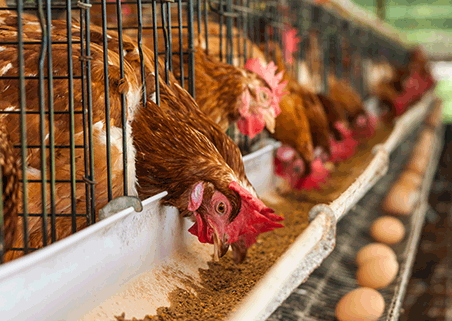 tips running successful poultry farm nigeria
