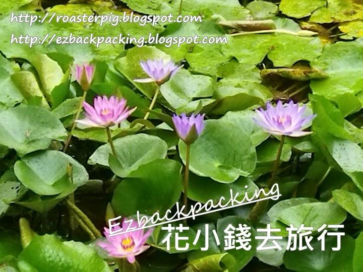 荔枝角公園蓮花