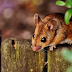 Tips How to Repel Mouse House Fast and Naturally
