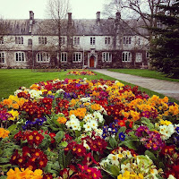 Pictures of Ireland: Flowers on the University College Cork (UCC) campus