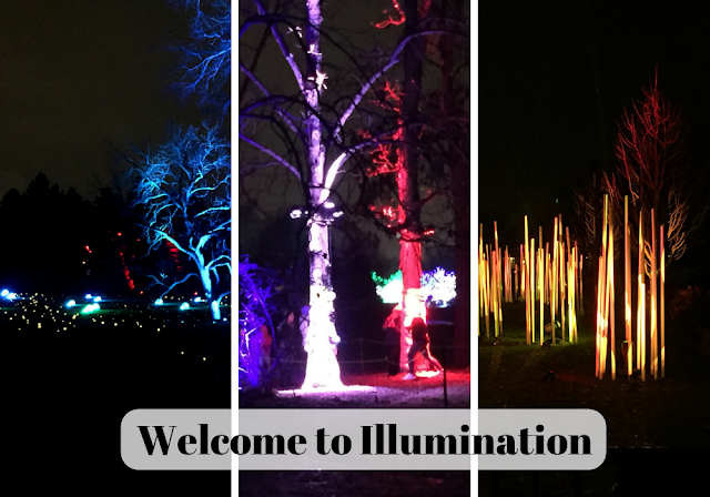 Illumination lights up nature in new ways at the Morton Arboretum in Lisle, Illinois