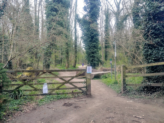 The gate leading back to Whippendell Wood from Rousebarn Lane