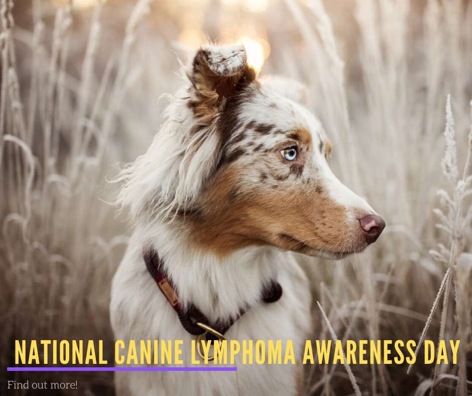 National Canine Lymphoma Awareness Day Wishes Pics