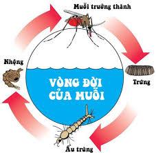 Diệt muỗi tại Cầu Giấy