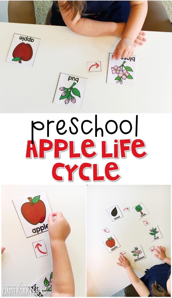 preschool apples mrs plemons u0027 kindergarten