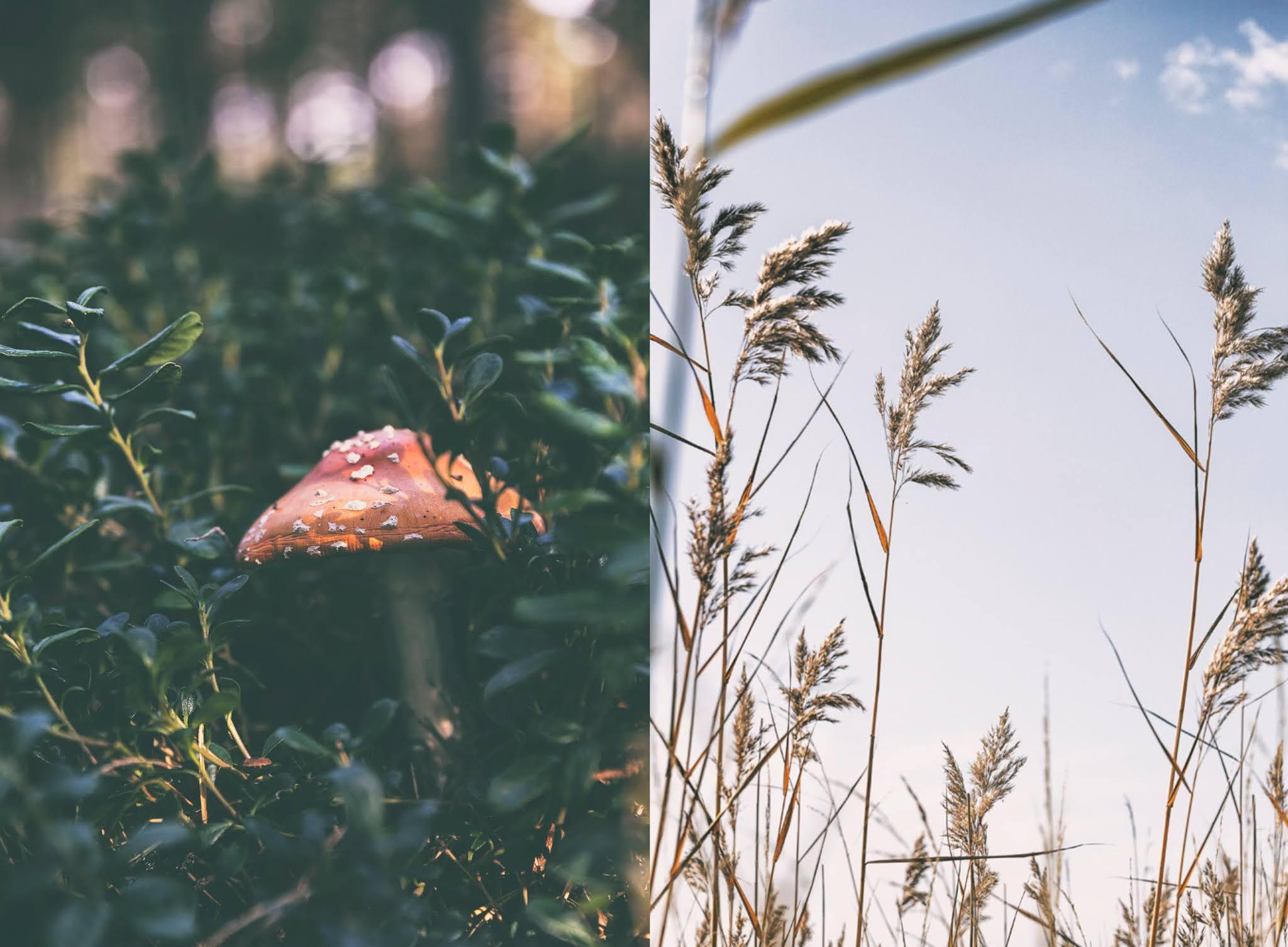 Helsinki, visithelsinki, Kallahdenniemi, Kallahti, Vuosaari, Suomi, Finland, visitfinland, valokuvaaja, luonto, luontokuva, valokuvaaminen, naturephotography, Frida steiner, Visualaddict, matkablogi, visualaddictfrida